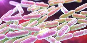 lattobacilli (fonte wellMe.it)