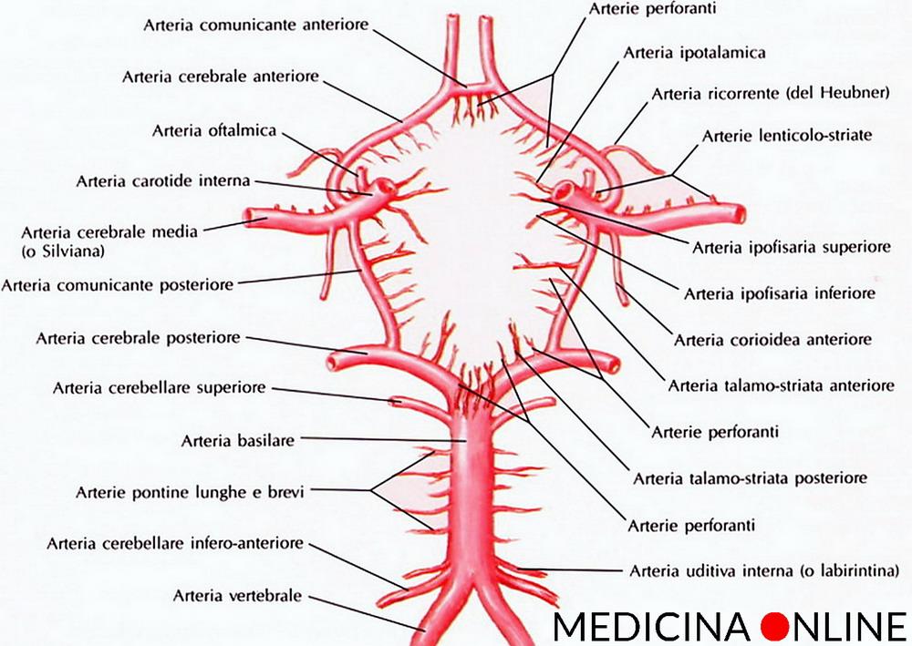 le arterie encefaliche del poligono di Willis