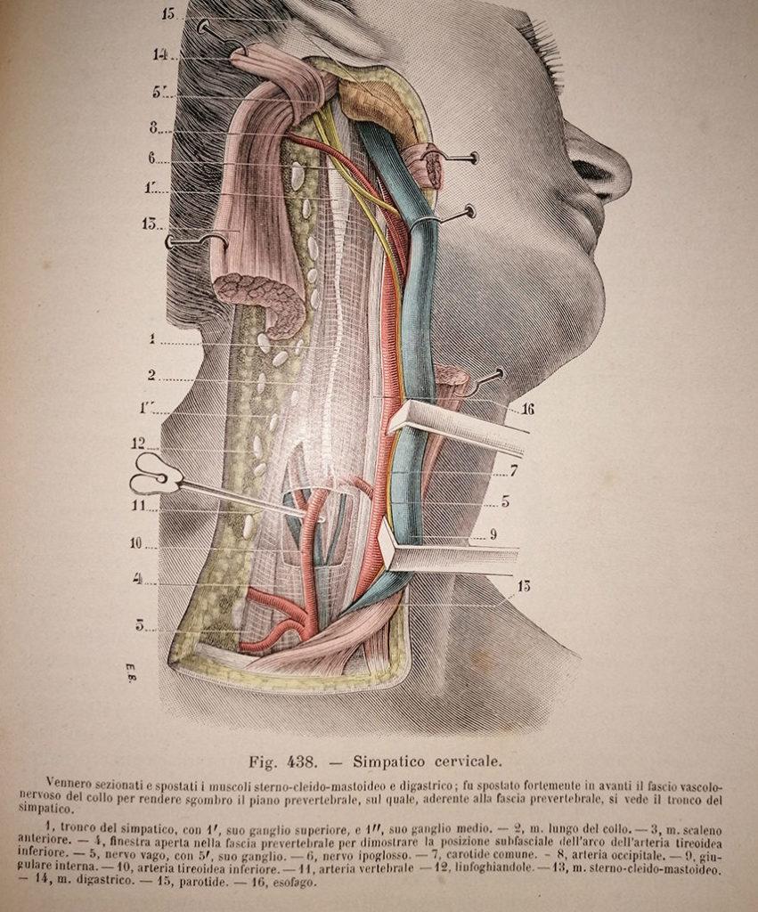 (orto)simpatico cervicale dx