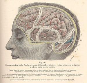 Testut e Jacob, 1906 - emisfero cerebrale sin. superficiale