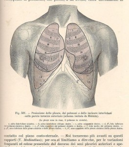 Testut e Jacob, 1906 - proiezione ant. dei polmoni