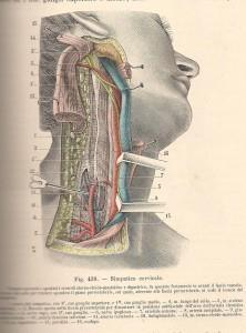 Testut e Jacob, 1906 - regione latero-cervicale dx