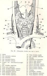 ghiandola tiroidea da Chirurgia del collo, De Cesare E.